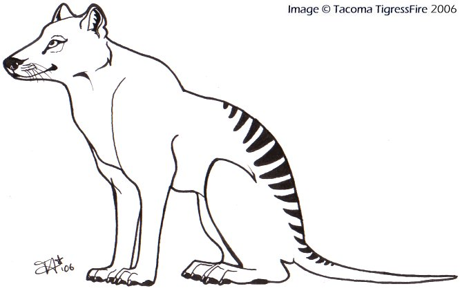 tasmania Colouring Pages